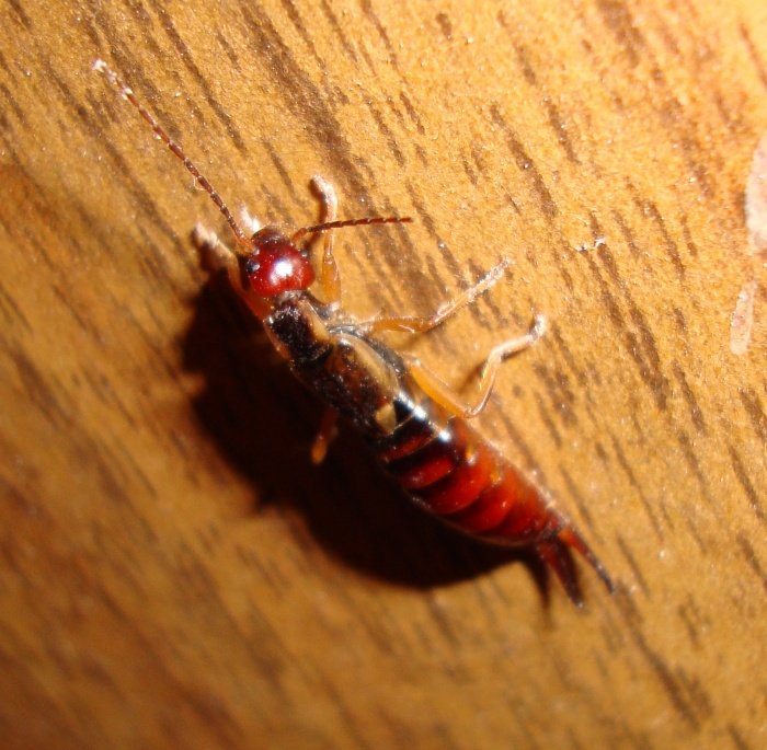 red 39 s blog weird bug i found in my basement